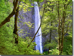Latourell Falls at Columbia Gorge
