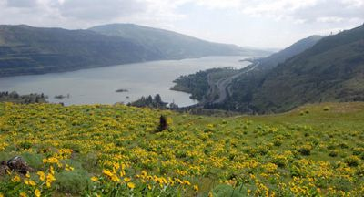 View Of Gorge With Wildflowers