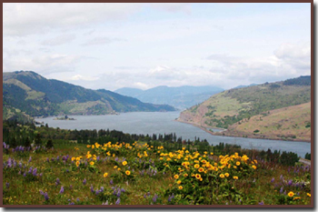 View of the Columbia Gorge River