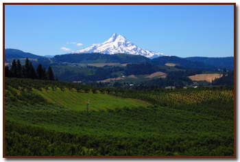 Columbia River Gorge Winery View Of Mount Hood In Oregon