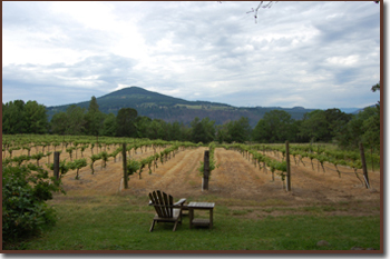 Winery in the Columbia River Gorge